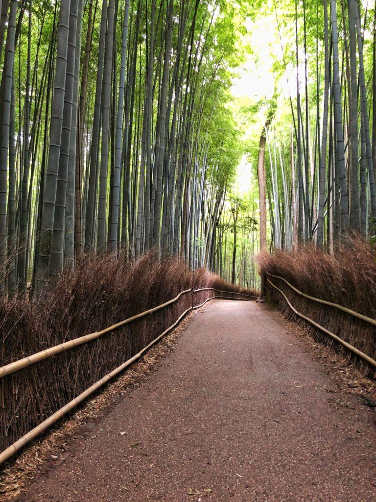 Bamboo forest in Arashiyama in Kyoto Japan