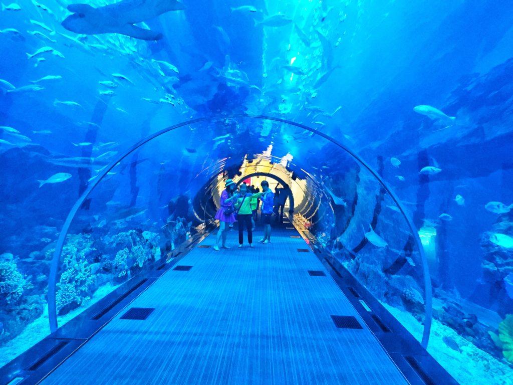 Aquarium with many fishes in the Dubai Mall in Dubai