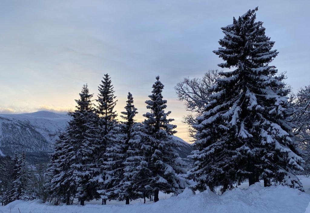 Snowy trees in winter in Tromsø Norway